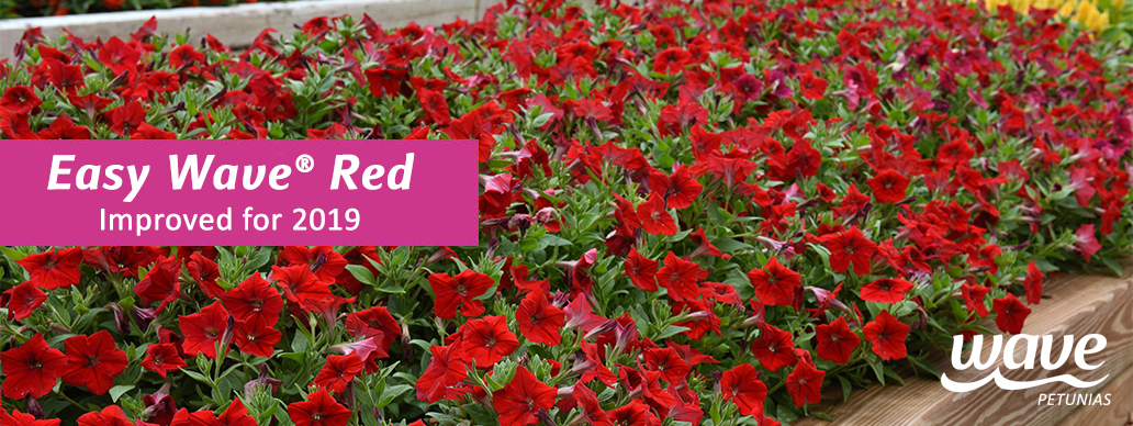Easy Wave Red Petunia