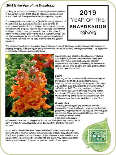 Year Of The Snapdragon