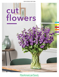 53f4f0c5edd3201c1cdfac7d_cat_cutflowers.jpg