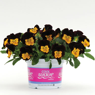 Cool Wave® Pansies