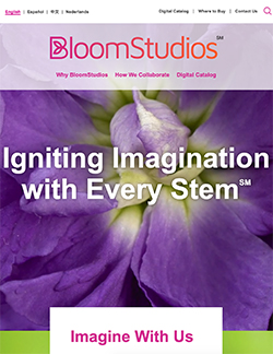 BloomStudios website