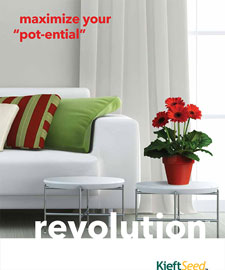 Gerbera Revolution brochure