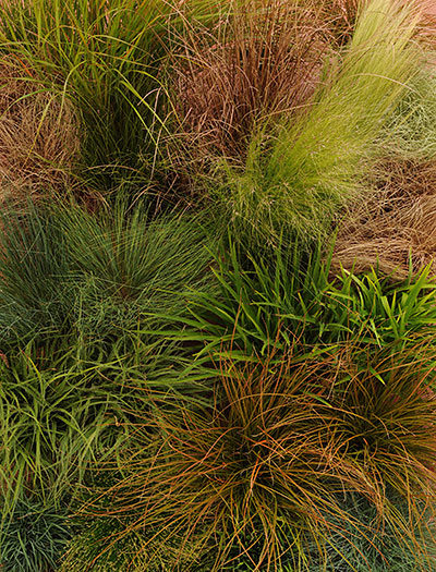 ColorGrass
